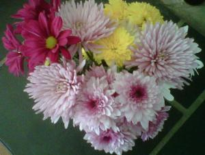 WITS Flowers