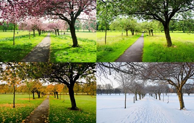 the-four-seasons